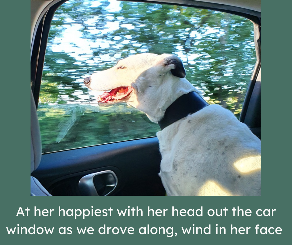 white and black dog in a car